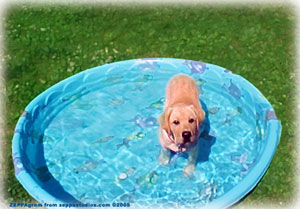 Uncle Snake as a pup in a pool.